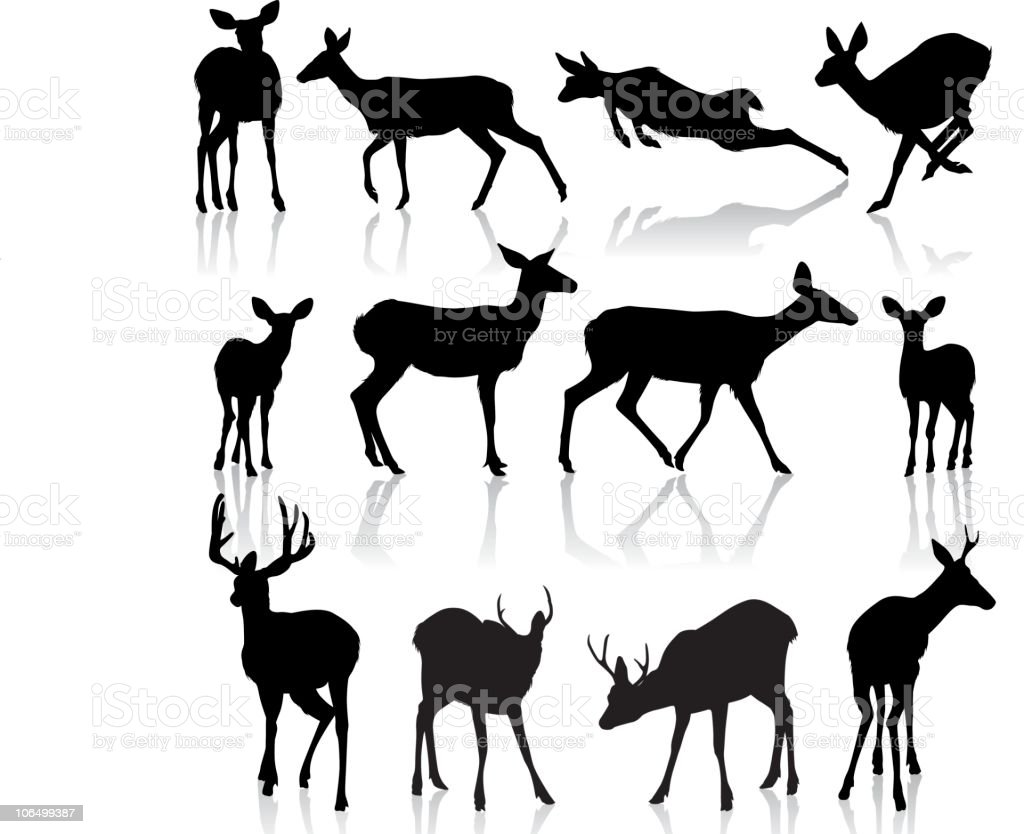 Silhouettes de cerf - Illustration vectorielle