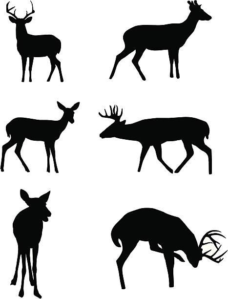 hirsch silhouetten - hirsch stock-grafiken, -clipart, -cartoons und -symbole