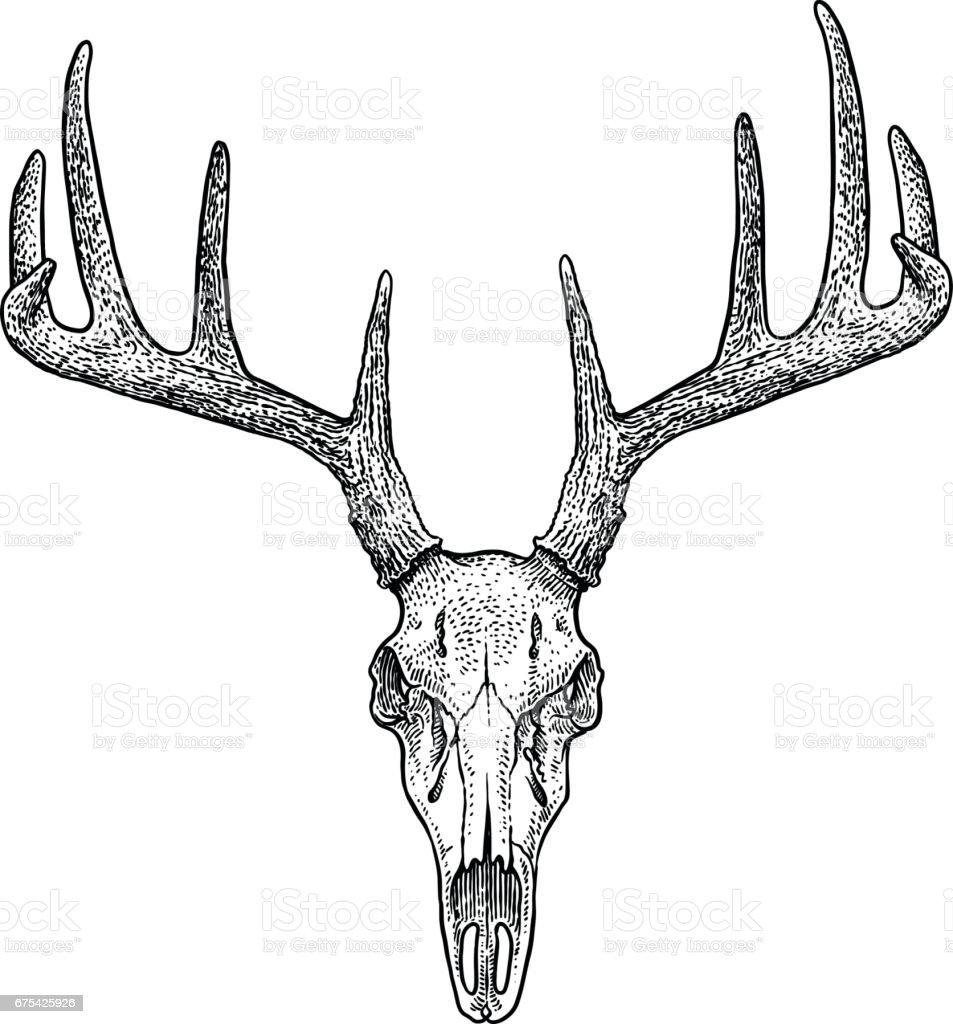 Image De Art Deer And Drawing: Deer Skull Illustration Drawing Engraving Ink Line Art