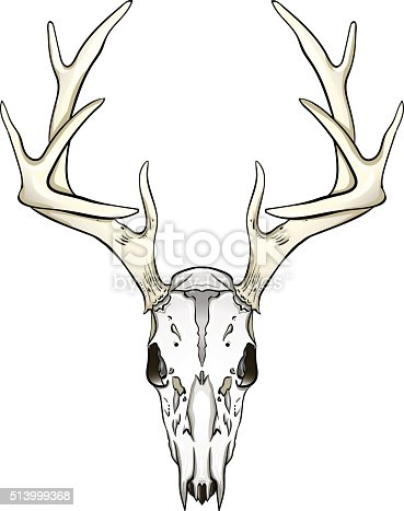 Free Deer Skull Clipart And Vector Graphics Clipart Me