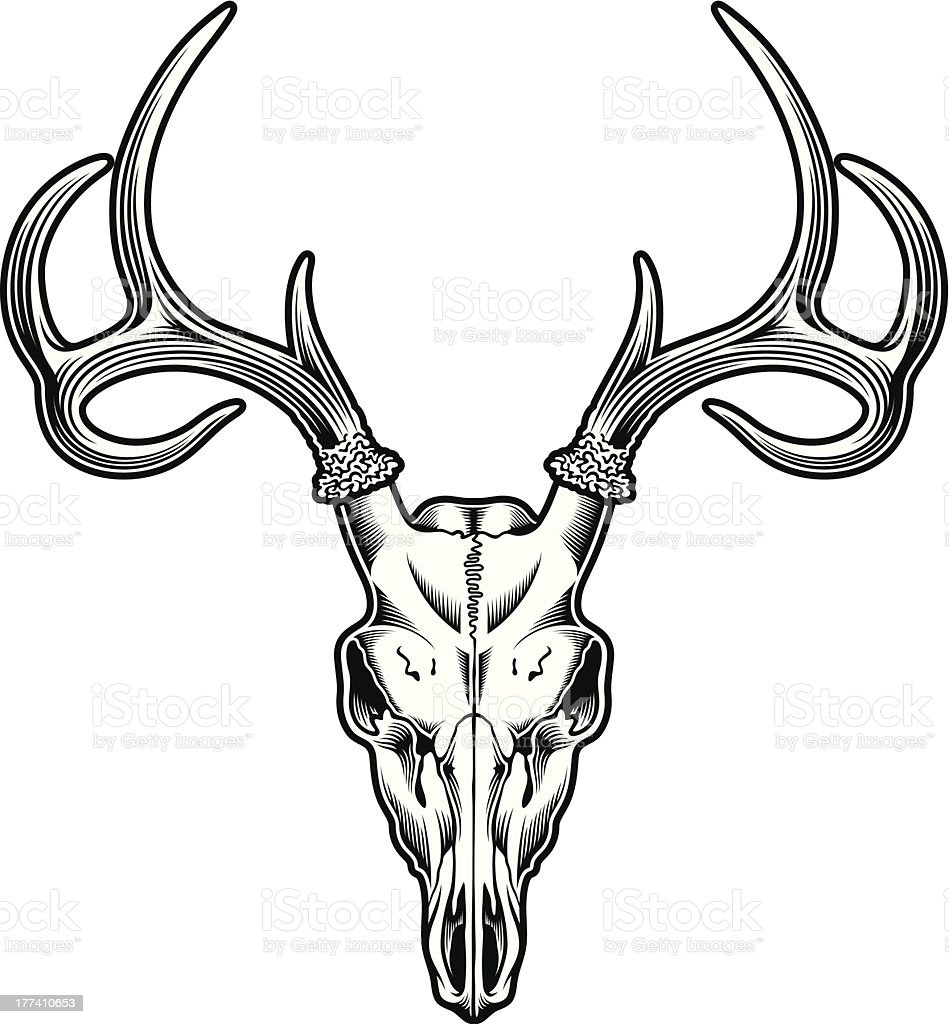Deer Skull royalty-free stock vector art