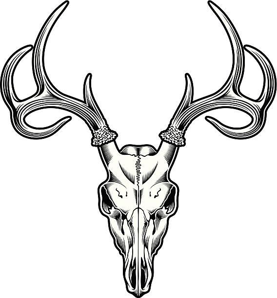deer skull - animal skull stock illustrations