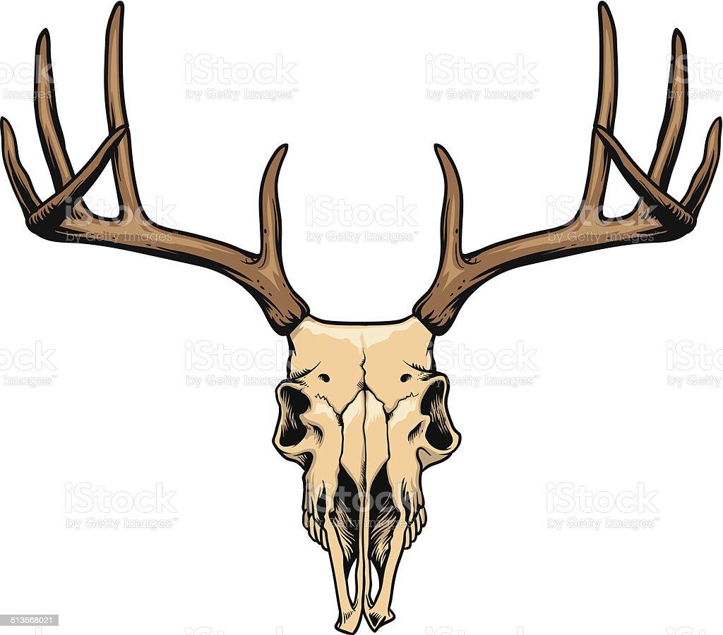 deer skull vector art illustration