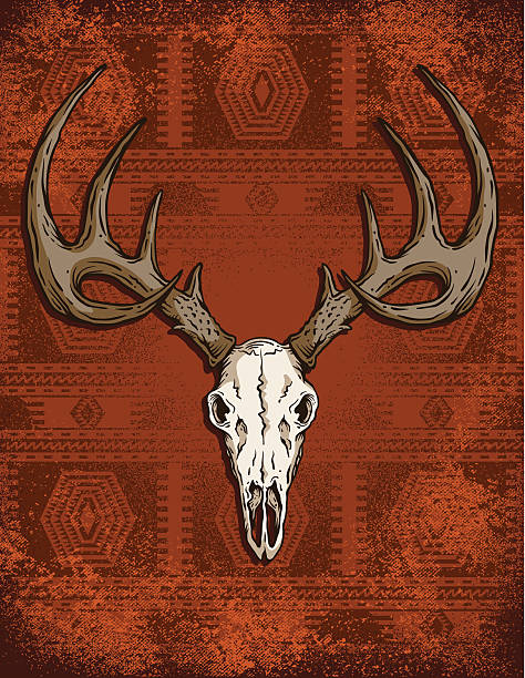 Deer crânio Ocidental - ilustração de arte em vetor