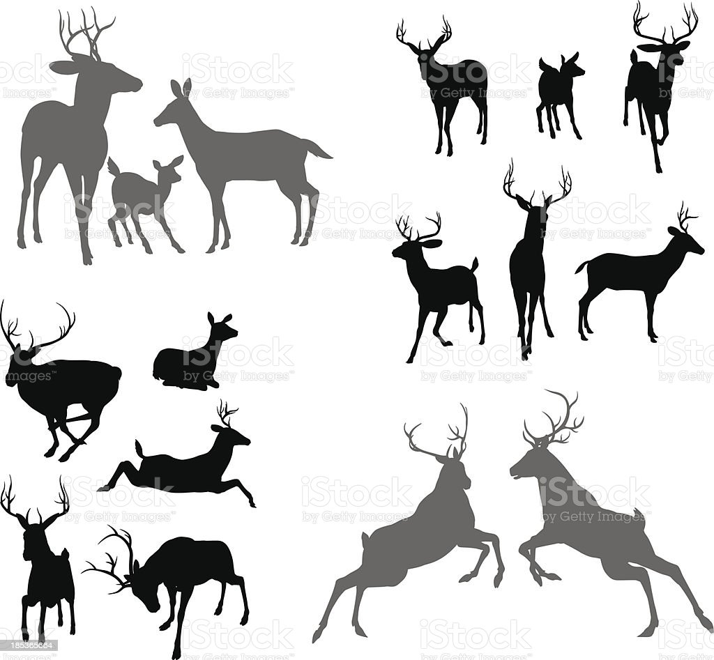 Cerf cerf fauve et silhouettes doe - Illustration vectorielle