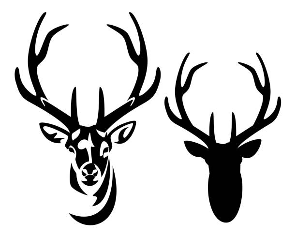 deer stag with big antlers black and white vector portrait wild deer stag head with big antlers front view black and white vector silhouette and outline stag stock illustrations