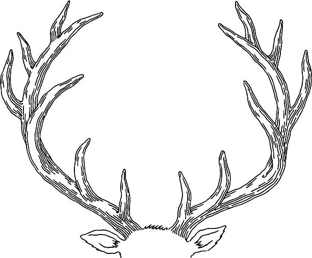 deer - deer antlers stock illustrations, clip art, cartoons, & icons