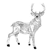 Deer Wearing a Scarf Vector Ink Illustration in Vintage Engraving Style
