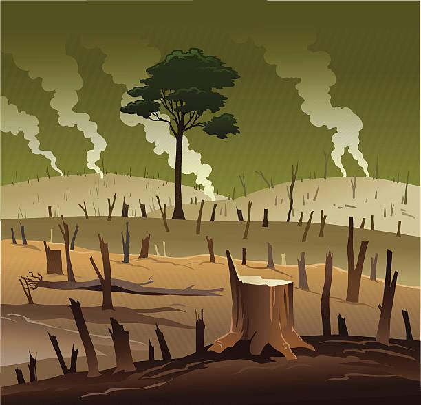 ilustrações de stock, clip art, desenhos animados e ícones de desflorestação e a árvore solitária - planta morta
