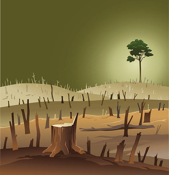 вырубка леса-пустырь с выражением дерево - ущерб окружающей среде stock illustrations