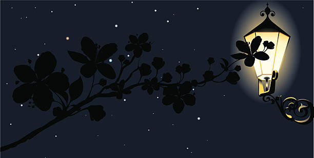 Delicate branch abloom at night vector art illustration