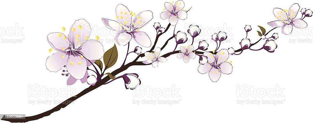 Delicate branch abloom royalty-free stock vector art