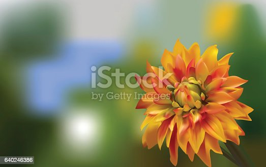 Delicate red gold Aster on a blurred green background