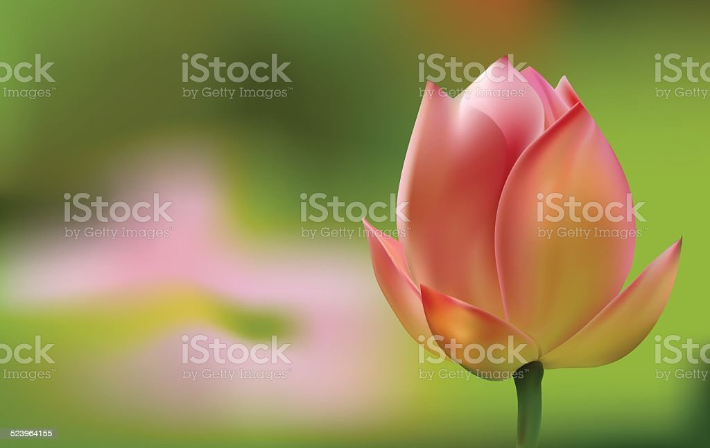 Delicate pink Tulip on green background vector art illustration