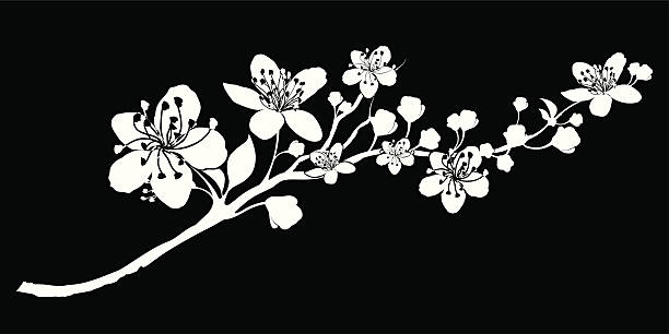 Delicate Silhouette of a branch abloom vector art illustration