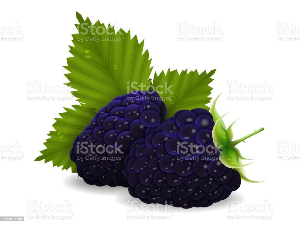 美味多汁的黑莓漿果與樹葉在白色的背景。現實的風格。向量插圖。 - 免版稅夏天圖庫向量圖形