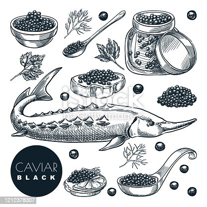 Delicious delicacy sturgeon fish black caviar, isolated on white background. Sketch vector illustration of luxury gourmet cuisine. Hand drawn seafood delicatessen food design elements