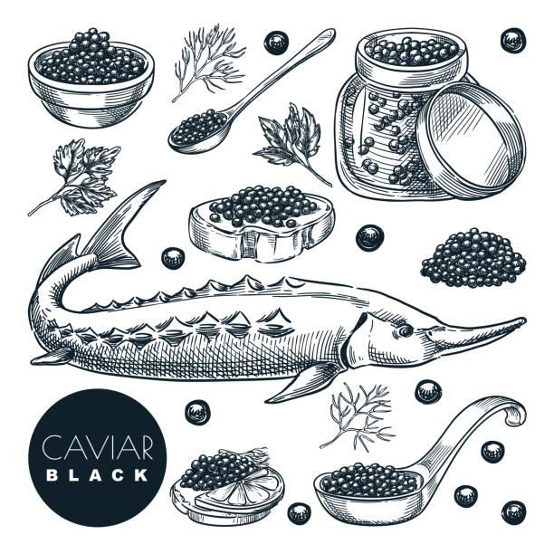 ilustraciones, imágenes clip art, dibujos animados e iconos de stock de delicioso caviar negro de pescado de esturión, aislado sobre fondo blanco. ilustración vectorial de bocetos de la cocina gourmet de lujo - caviar
