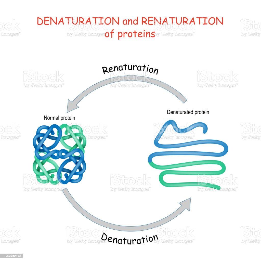 Denaturaatio