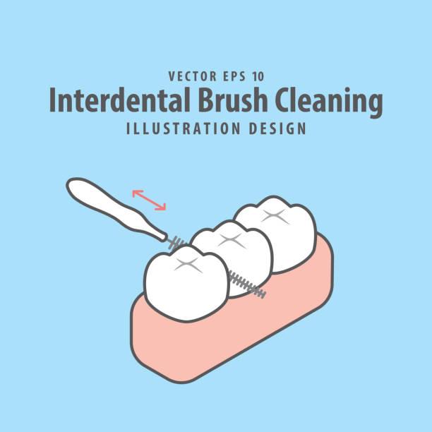 bildbanksillustrationer, clip art samt tecknat material och ikoner med dental interdental borste rengöring av tänder illustration vektor design på blå bakgrund. tandvårdskoncept. - tandsten
