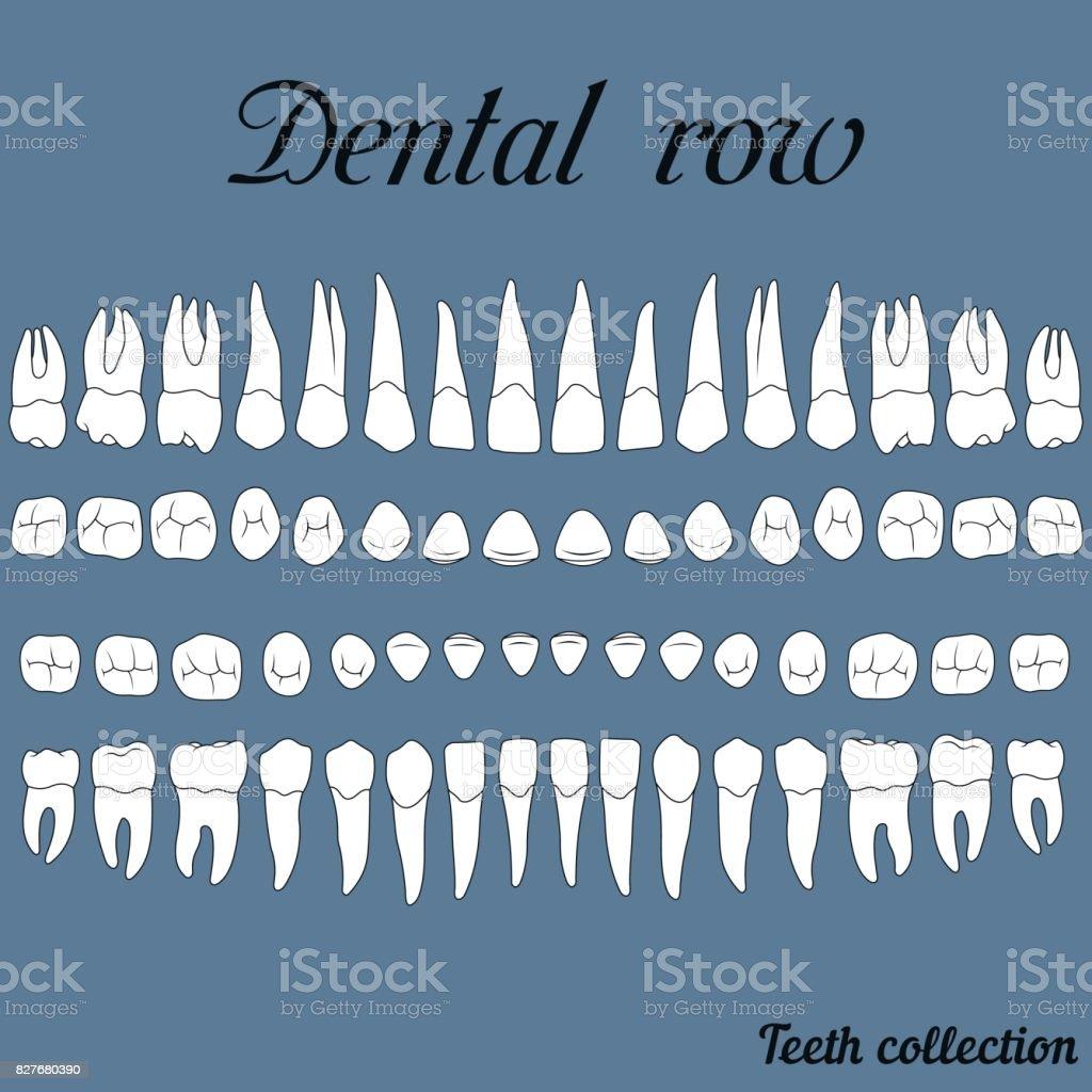 dental row teeth vector art illustration