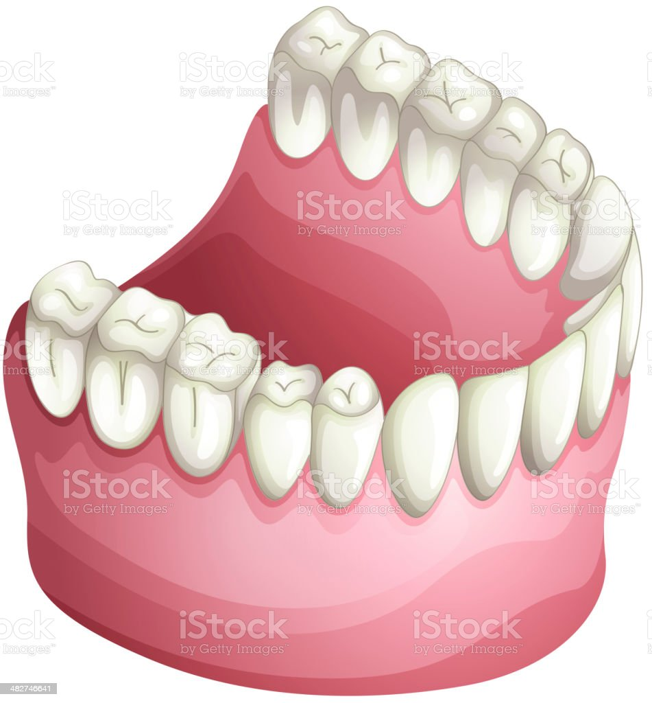 Denture vector art illustration