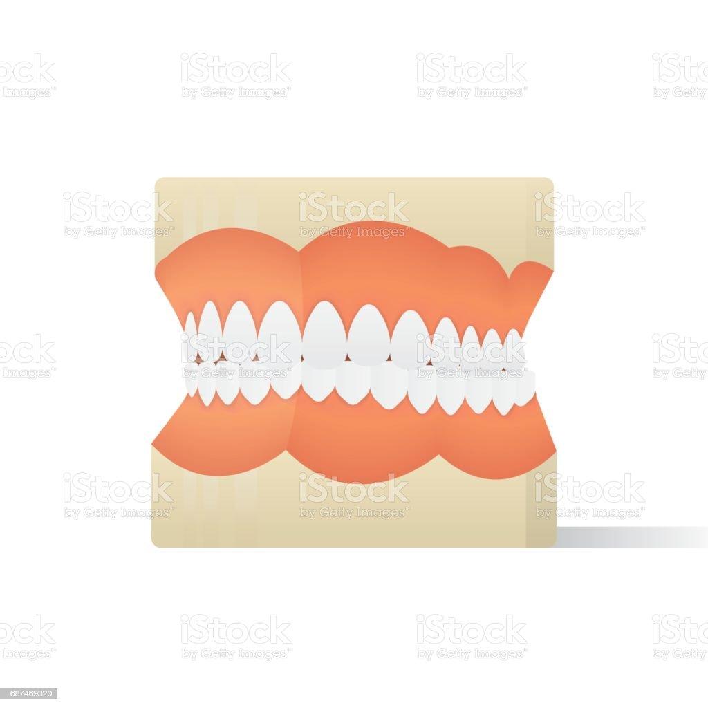 Dentures model illustration vector on white background. Medical concept. vector art illustration