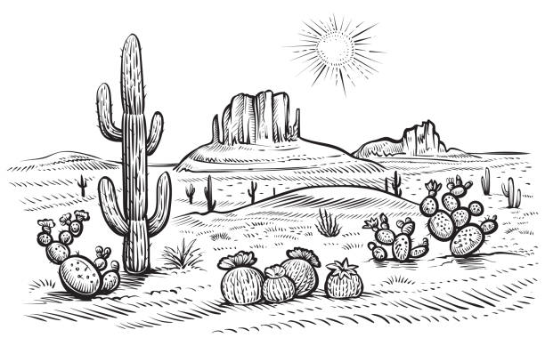 Best Drawing Of A Arizona Desert Sunset Illustrations ...