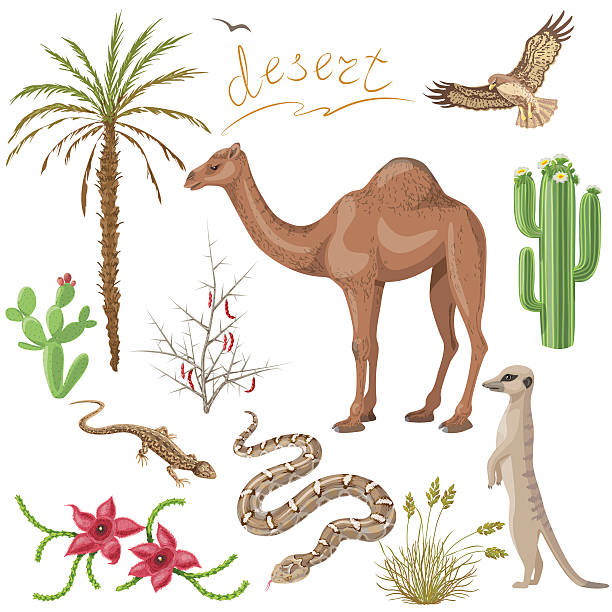 Best Desert Animals Illustrations, Royalty-Free Vector ...