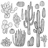 Desert plants, cacti. Vector sketch  illustration.