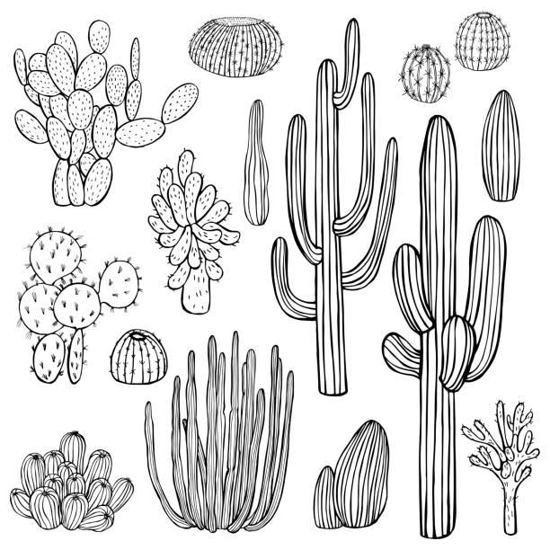 ilustraciones, imágenes clip art, dibujos animados e iconos de stock de plantas del desierto, cactus. ilustración vectorial. - conceptos y temas