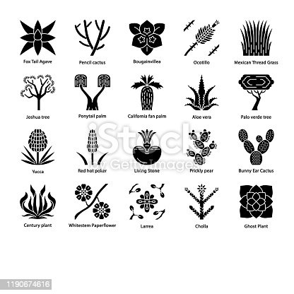 Desert plants glyph icons set. Exotic flora. California desert cacti, grass and trees. American and Mexican succulents, palms. Silhouette symbols. Vector isolated illustration