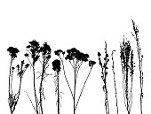 Silhouettes of dried wild flowers.