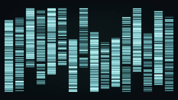 Design Color Big Genomic Data Visualization Vector Design Color Big Genomic Data Visualization Vector. Dna Test, Barcoding, Genomic Map Architecture. Medical Chromosome Analysis Graphic Bioinformatic Diagram Template Flat Illustration genomics stock illustrations