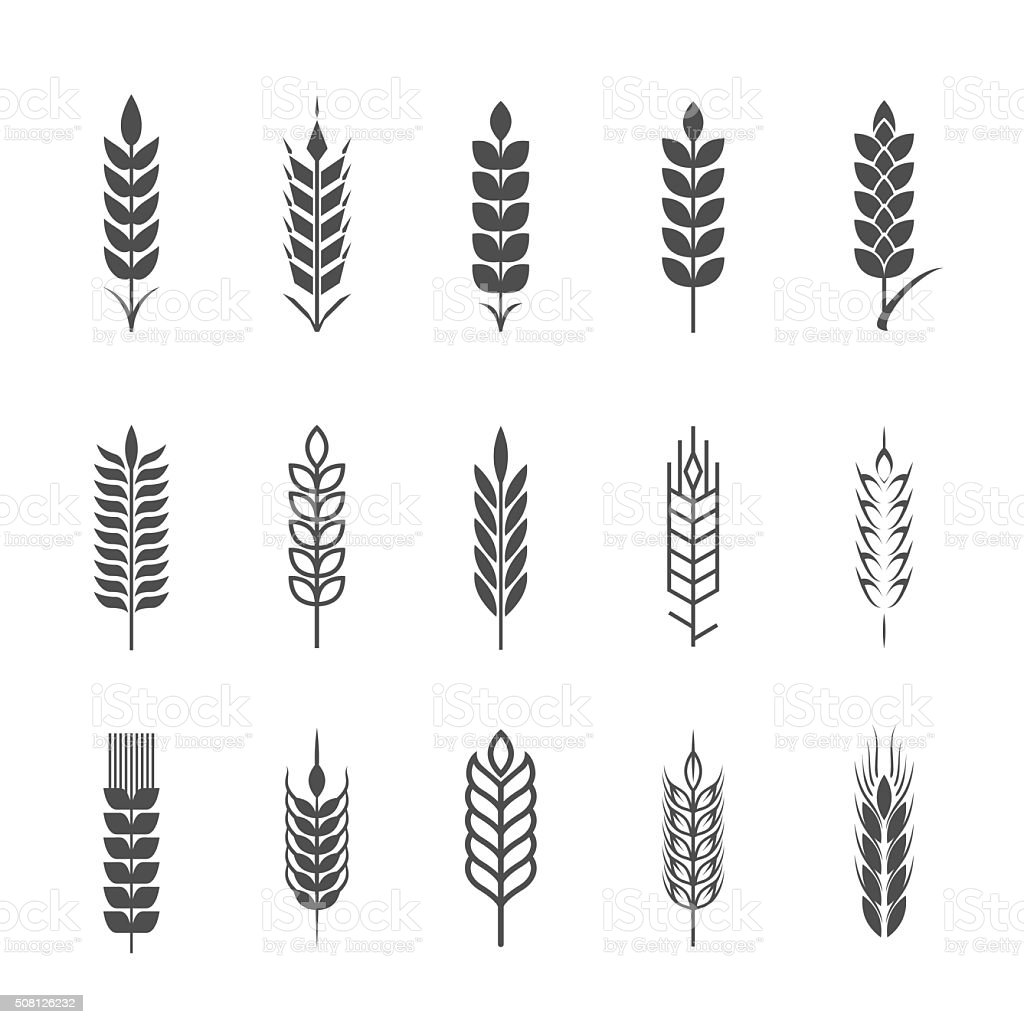 Design elements. Agriculture grain, organic plant, bread food, natural harvest. vector art illustration