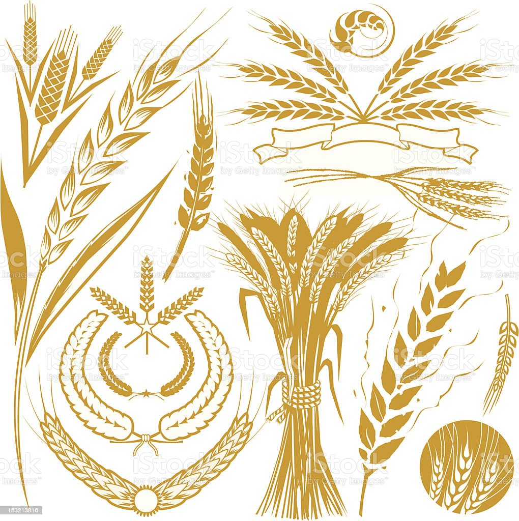 Design Elements - Wheat vector art illustration