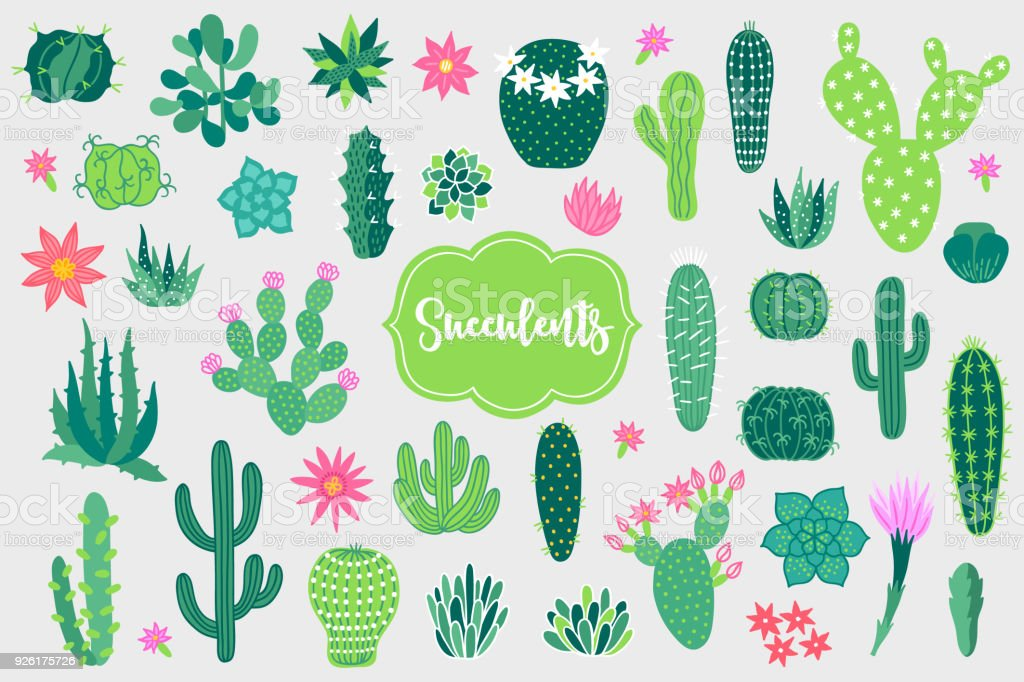 Design elements with opuntia, echinocactus, aloe and other cactuses vector art illustration