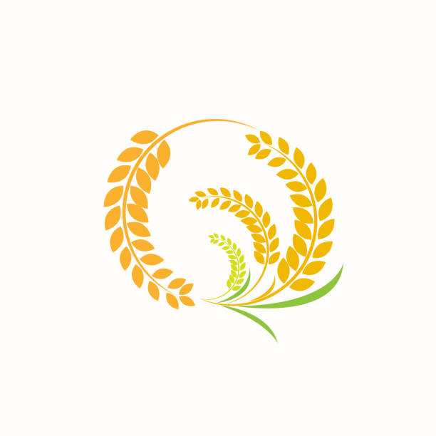 Design Orange brown paddy rice premium natural vector art illustration