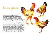 Design template with orange-red watercolor hens and roosters