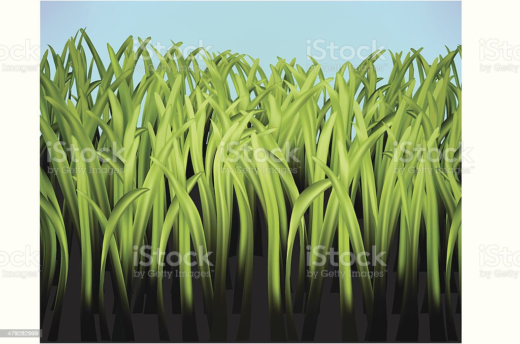 Detail or up close grass section vector art illustration