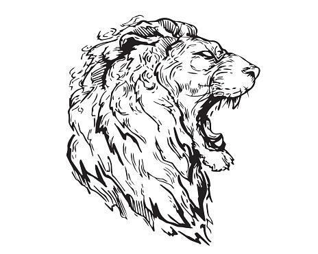 Tete De Lion En Colere Du Dessin Realiste Main Detail Illustration