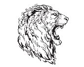 Detail Realistic Hand Drawing Angry Lion Head Illustration