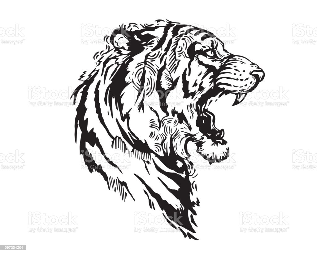 detail realistic hand drawing angry tiger head illustration stock