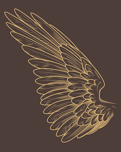 подробные птица крыло - граттаж stock illustrations