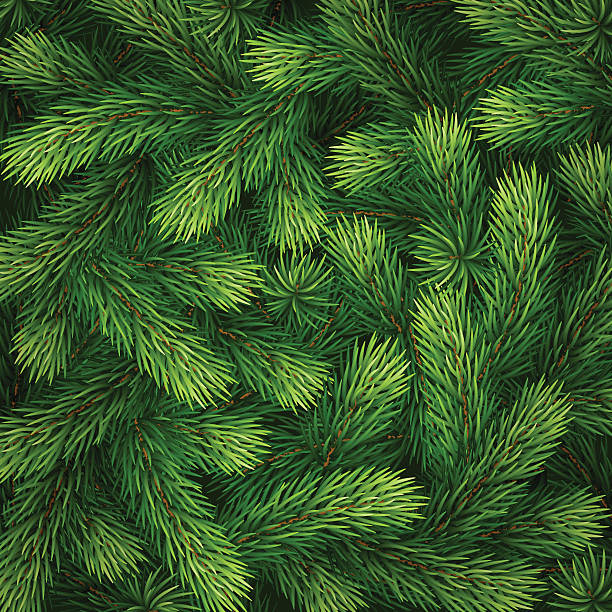 detailed christmas tree branches background - крупный план stock illustrations
