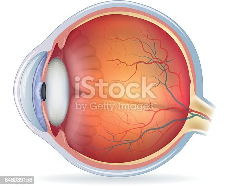 istock Detailed human eye anatomical illustration 648039158