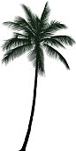 Detailed palm tree.
