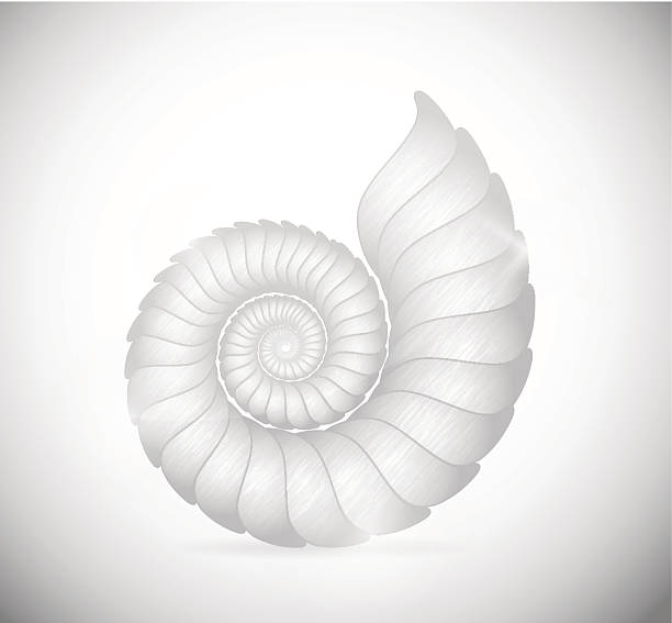 Detailed pencil sketch of a seashell Illustration of a sea shell clam. Illustration contains transparency and blending effects, eps 10 nautilus shell stock illustrations
