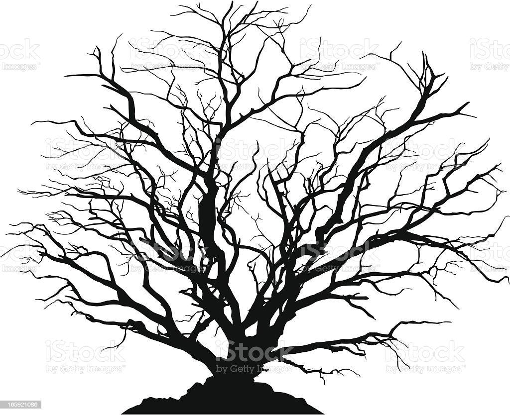 silhouette dtaille de larbre feuilles caduques sans feuilles silhouette dtaille de larbre - Arbre Sans Feuille