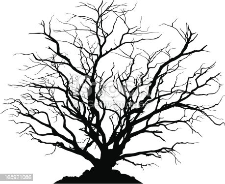 Silhouette of a round shaped deciduous tree with no leaves. Ground below can be separated from the tree.
